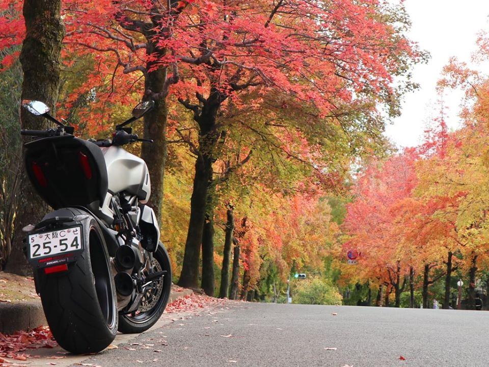 ディアベル1260と紅葉。