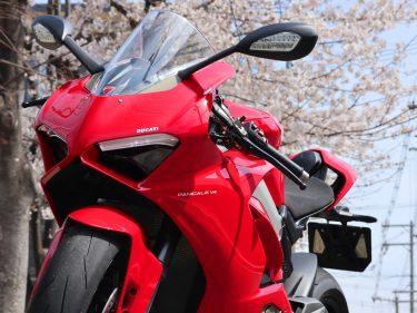 桜とコラボww